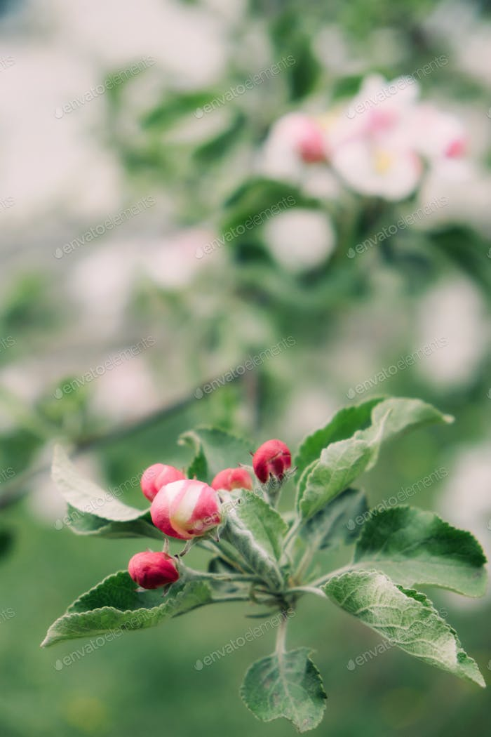 Frühlings-Blumen-Banner Frühlingserneuerung, Natur im Frühling, Blumen, blühend, neues Leben, rosa Blume