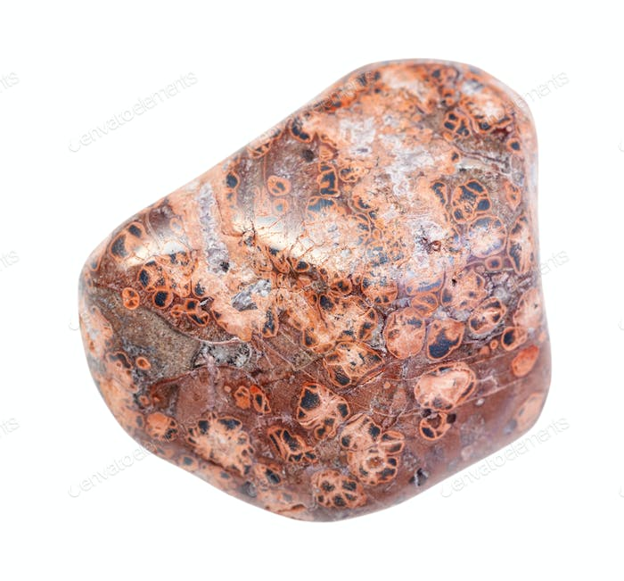 pebble of Leopard skin jasper (Jaguar Stone) stone