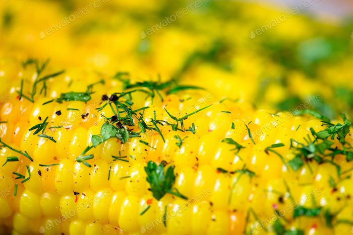 Boiled corn with spices on grey light concrete background. Copy space, macro
