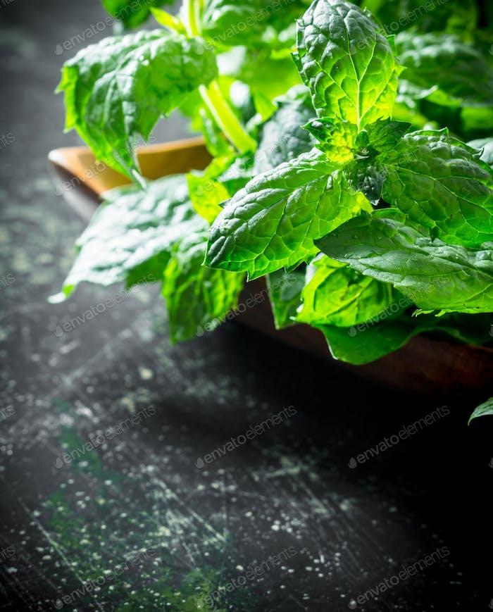Healthy food. Fresh mint.