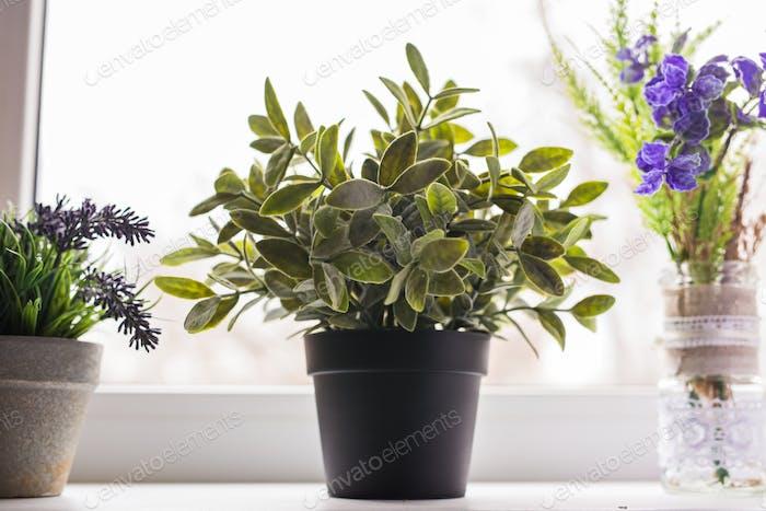 Green plant on the windowsill