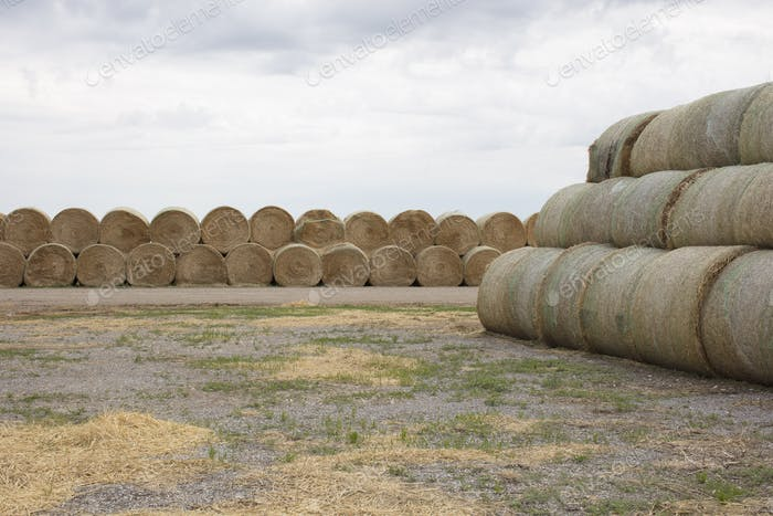 Stacked hay balesafter the harvest, winter fodder for animals..