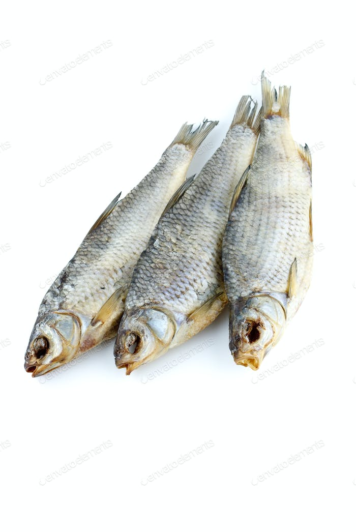 Three sea roach fishes