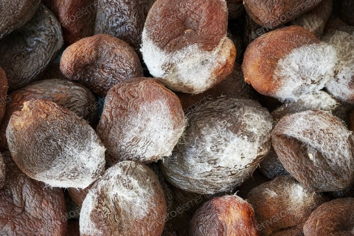 Close up picture of moldy dried apricots
