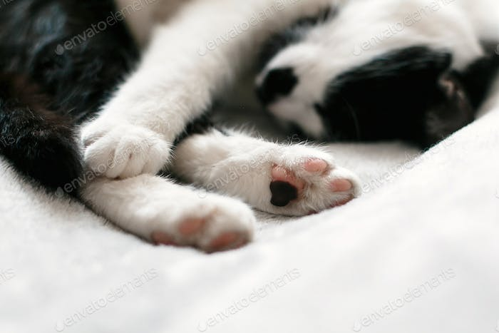 Sweet black and white cat resting on bed, sleeping in morning