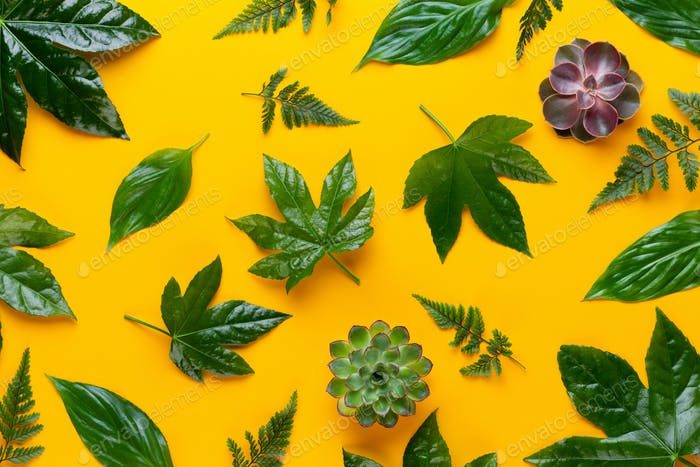Folhas de plantas verdes no fundo amarelo.