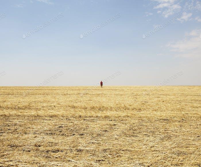 Ein Mann, der am Horizont eines Stoppelfeldes steht.