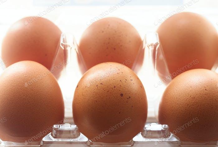 Eier in der Kunststoffschale