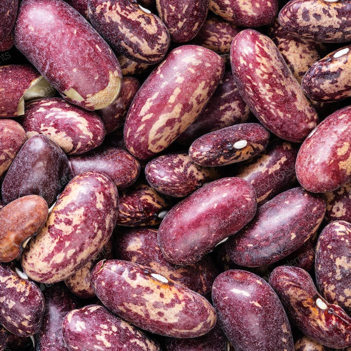 raw red spotted pinto beans close up