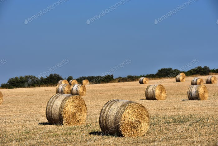 Straw bales, haystack against blue sky. Agricultural concept