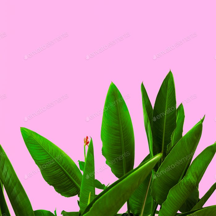 Plant on pink.  Tropical Flower  minimal art design