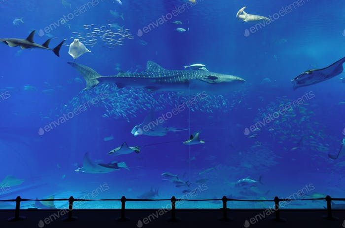 aquarium with whale shark in Okinawa