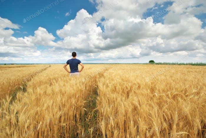 Mann auf gelber Weizenwiese.
