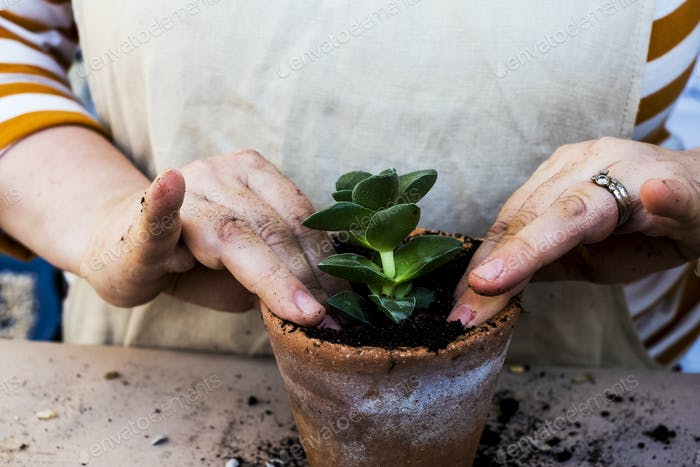 High angle close up of person planting succulents in  potting soil in a terracotta pot.