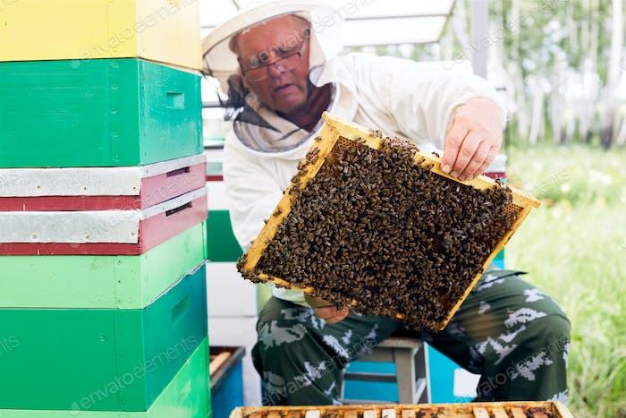Senior Beekeeper at Work