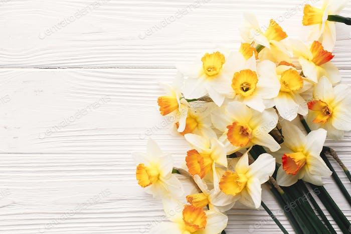 beautiful fresh daffodils on white wooden background
