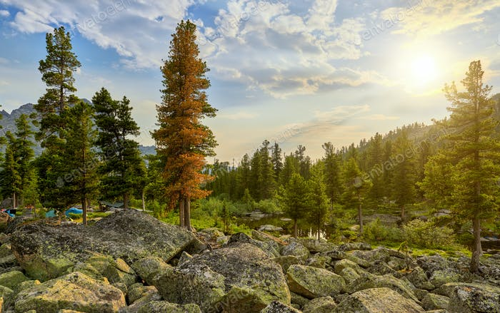 Morning Landscape in Siberian Mountain Forest