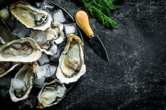 Appetizing raw oysters with ice cubes and a knife.