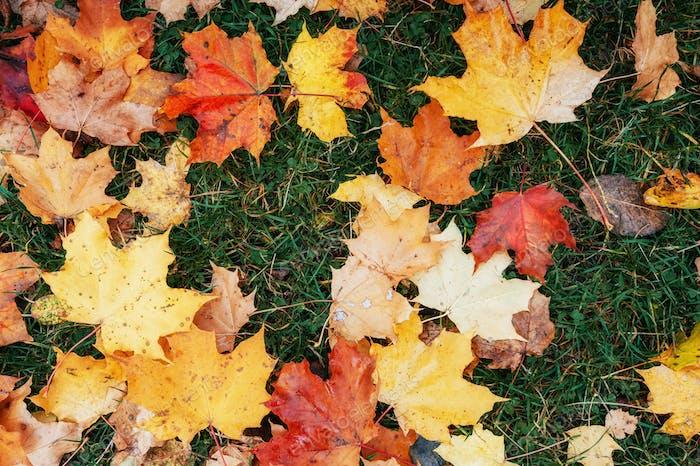 Yellow, orange and red autumn