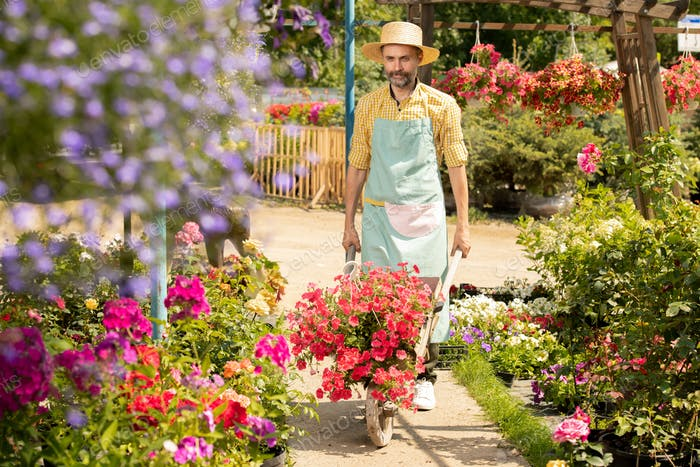 Mature farmer in hat and apron moving along flowerbeds in his garden