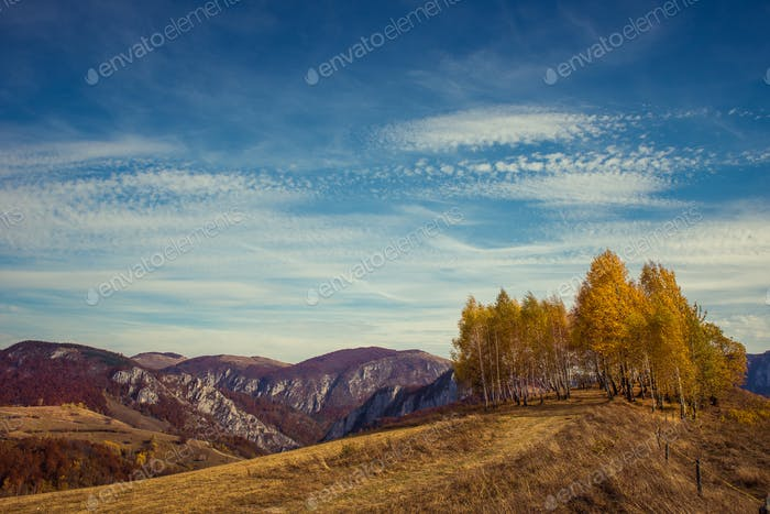 Mountain autumn landscape with colorful forest and birch trees. Filtered image