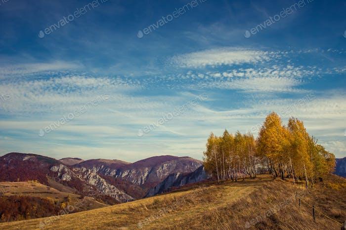 Berg-Herbstlandschaft mit bunten Wald und Birken. Gefiltertes Bild