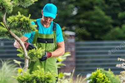 Garden Maintenance Performed by Pro Gardener