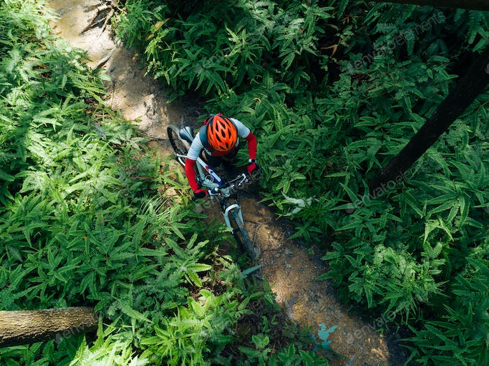 Aerial view of cross country biking in summer forest