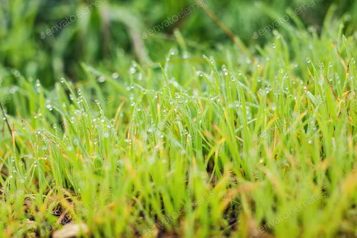 water drops on the green grass close up