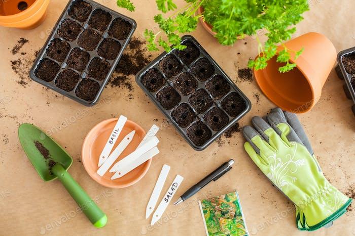 Gartenarbeit, Pflanzung zu Hause. Aussaat Samen in Keimbox