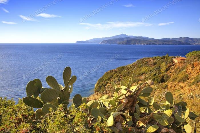 Elba island, cactus indian fig opuntia, coast view Capoliveri Tu