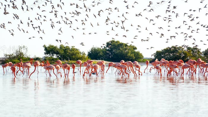 Flamingos and Royal Terns