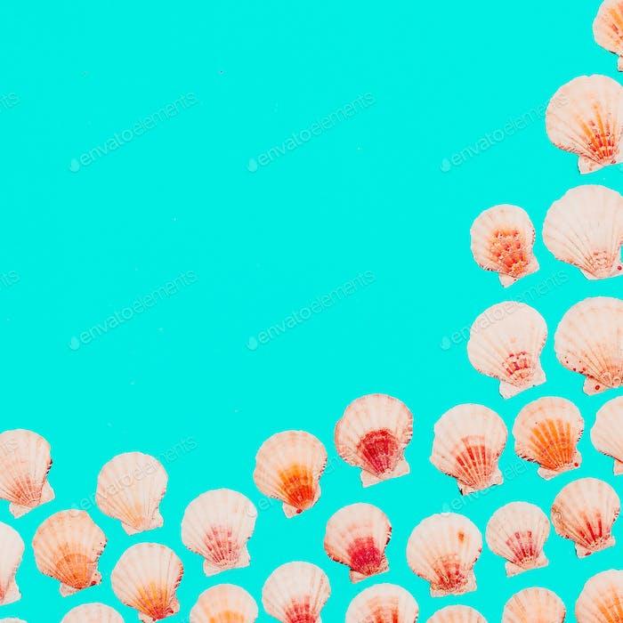 Shells background Marine mood. Minimal art