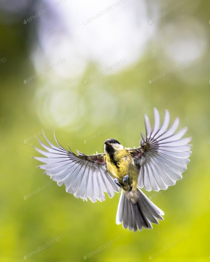 Bird in flight with copy space