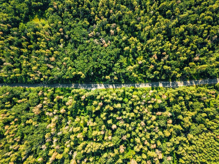 Aerial view of a drone on a green forest with asphalt road on a sunny day. Natural layout for your