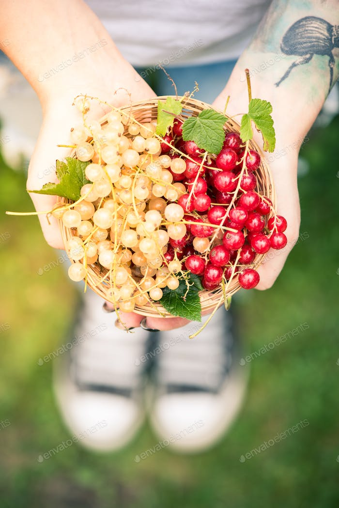 Young female holding freshly picked redcurrant and white fruits