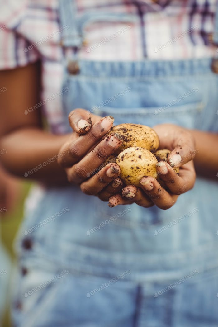 Close up of woman holding potatoes in the garden