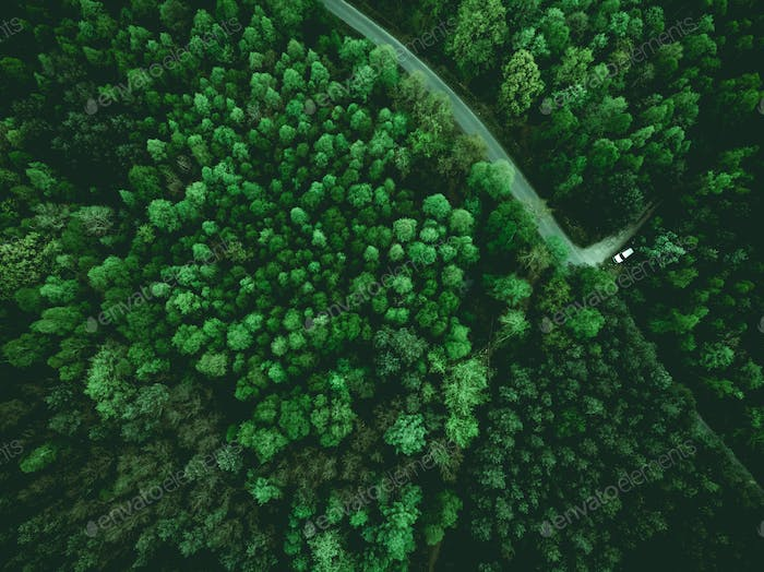 Wild forest and wonderlust car on road, aerial from above