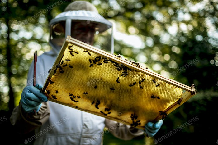 Beekeeper wearing a veil holding an inspection tray covered in bees.