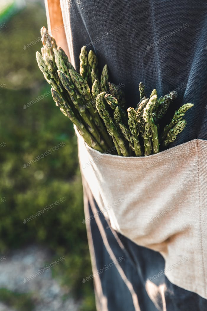 Green asparagus kept in men's hands