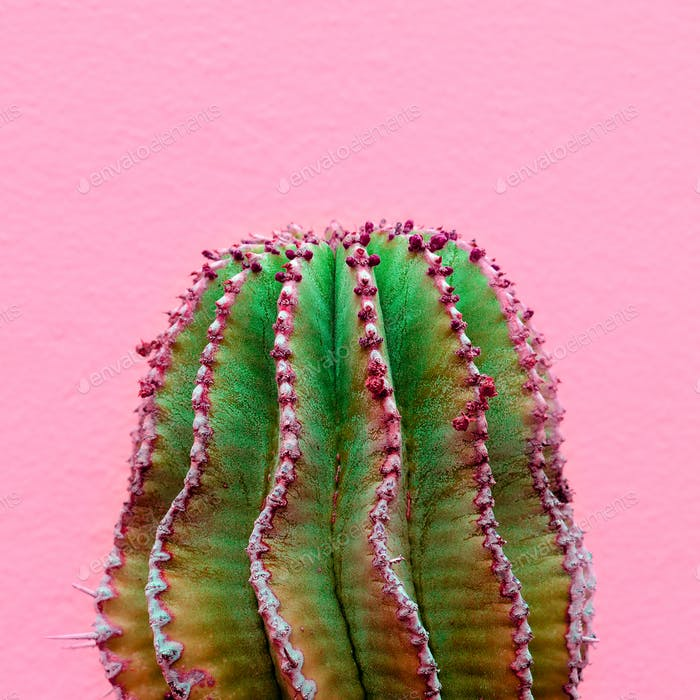 Plants on pink fashion concept. Cactus on pink wall