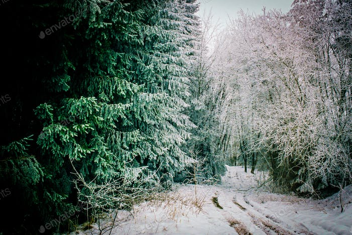 Path through the Winter Forest