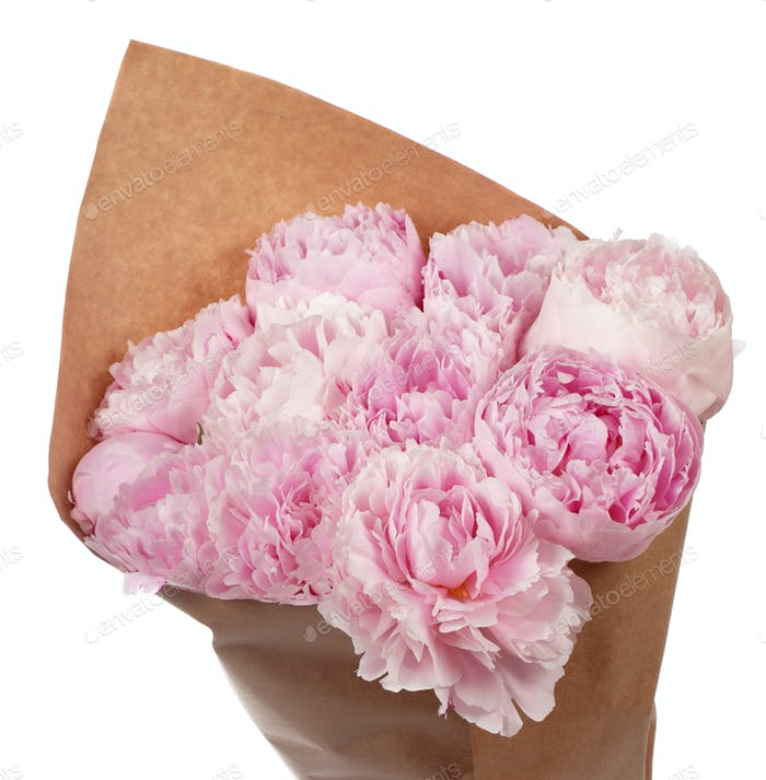 Bouquet of pink peonies in parchment