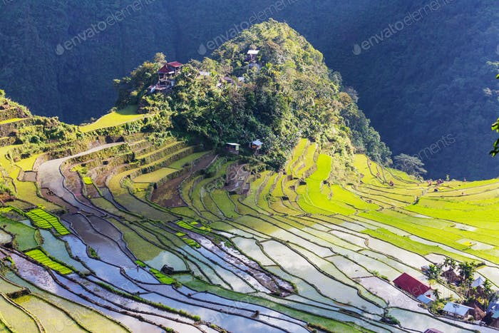 Thumbnail for Rice terraces