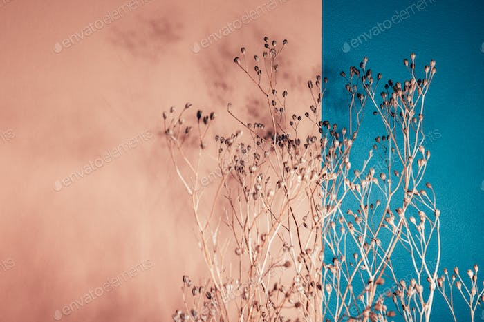 Decor from dry flowers or twigs