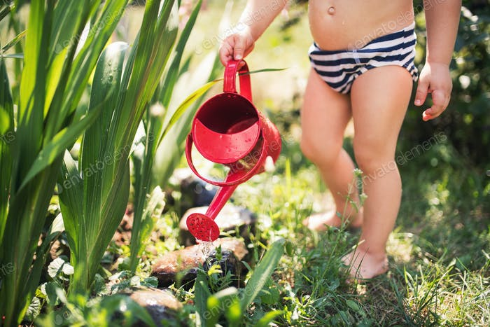 Small boy with can outdoors in garden in summer, watering flowers. A midsection.