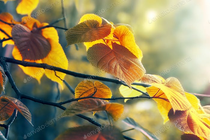 Abstract natural autumn background