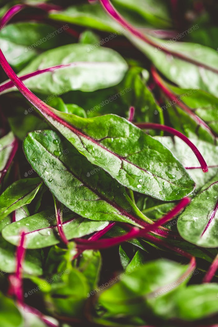 Fresh washed swiss chard leaves. Macro food photography.