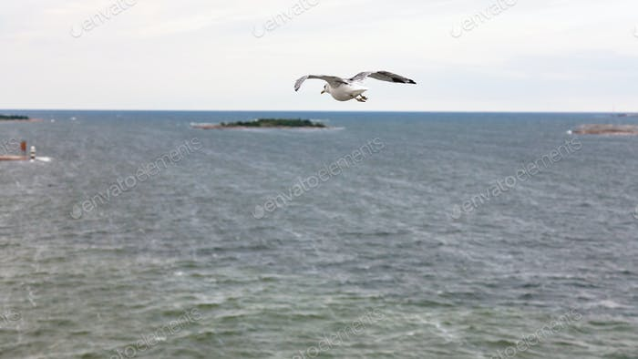 above view of gulls flying to island in Baltic Sea