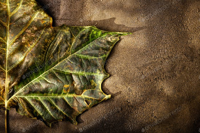 Dried leaf and artistic background textures with tree shadows